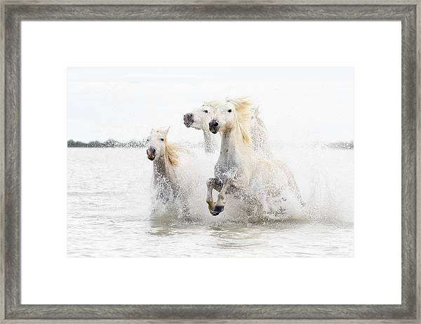 Horses  Hight Key Framed Print