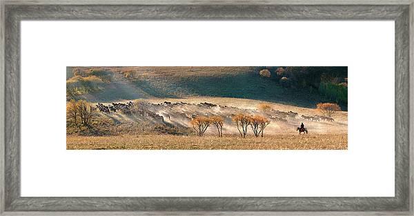 Horses Framed Print by Hua Zhu