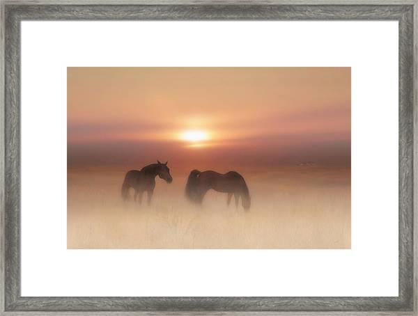 Horses In A Misty Dawn Framed Print