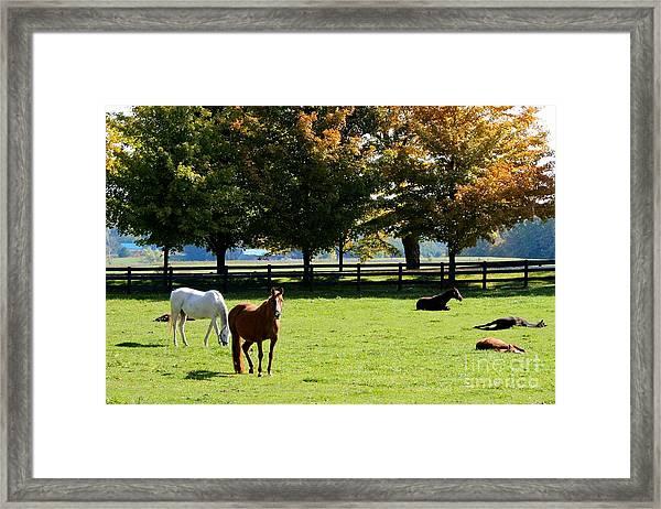 Horses In Fall Framed Print
