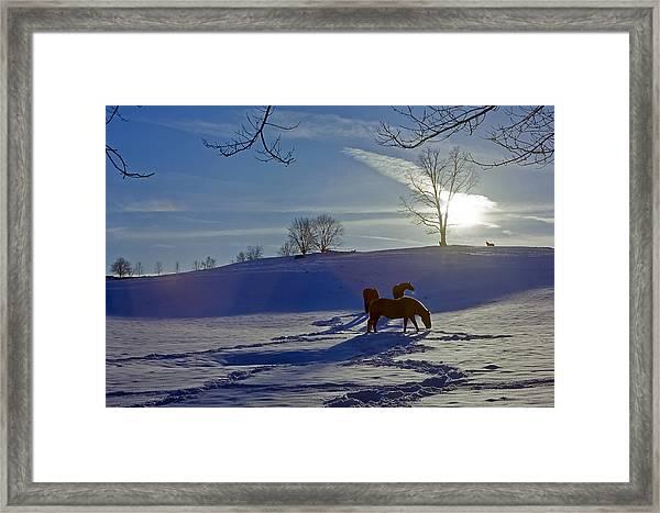 Horses In Snow Framed Print