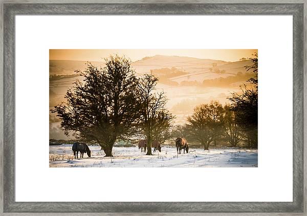 Horses In The Snow Framed Print
