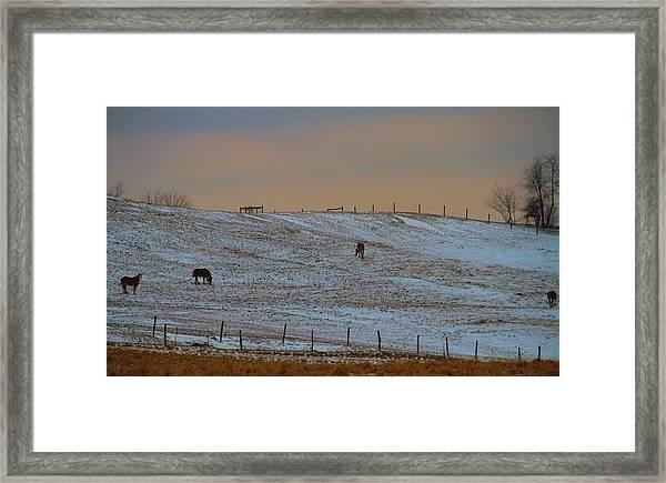 Horses On The Farm In Winter Framed Print