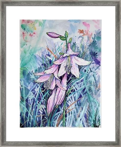 Hosta's In Bloom Framed Print