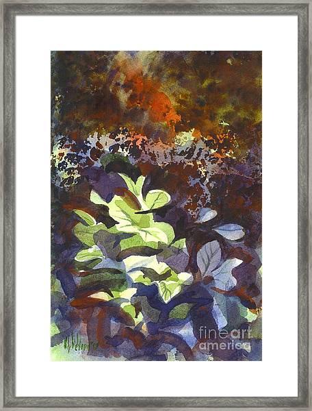 Hostas In The Forest Framed Print