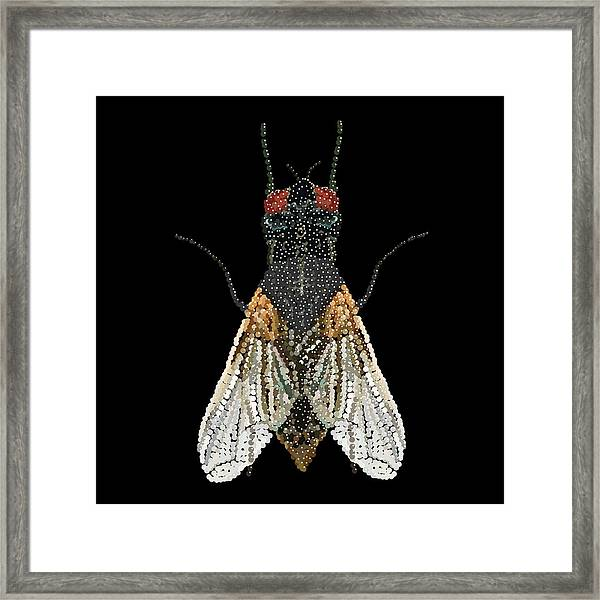 House Fly Bedazzled Framed Print