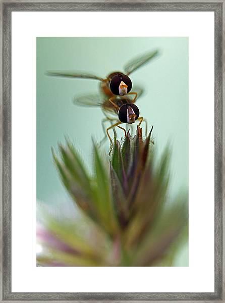 Hover Bugs Framed Print