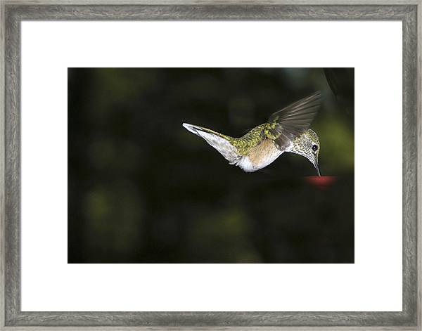 Hovering Beauty Framed Print