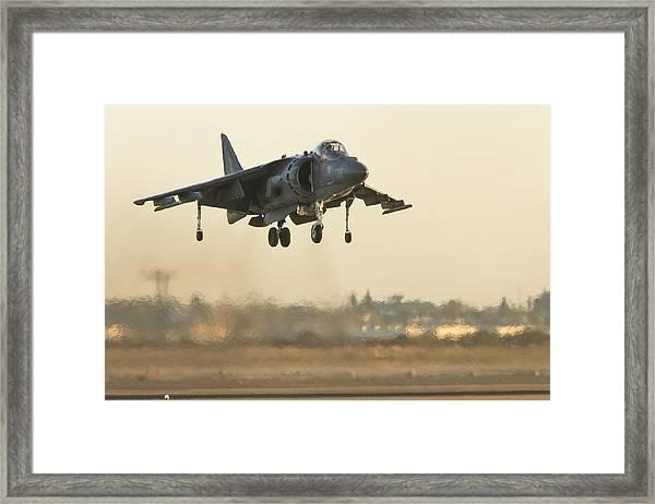 Hovering Harrier Framed Print