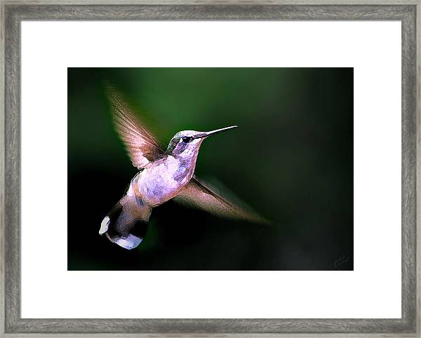 Hummer Ballet 1 Framed Print