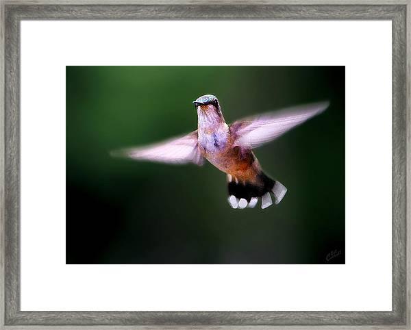 Hummer Ballet 3 Framed Print