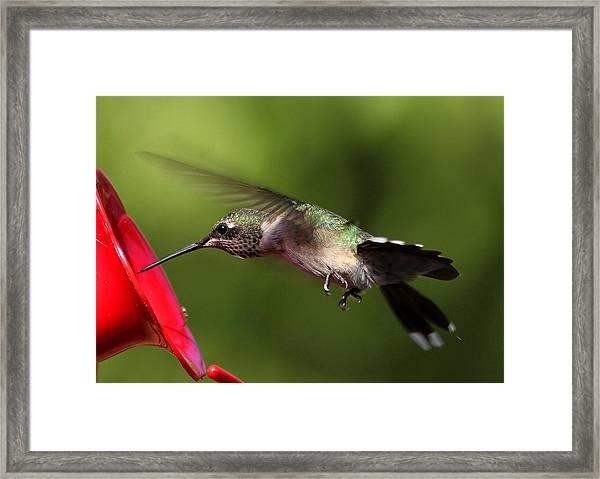 Look Hummingbird Eyelashes Framed Print