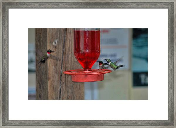 Framed Print featuring the photograph Hummers by David Armstrong