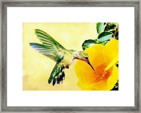 Hummingbird And California Poppy Framed Print