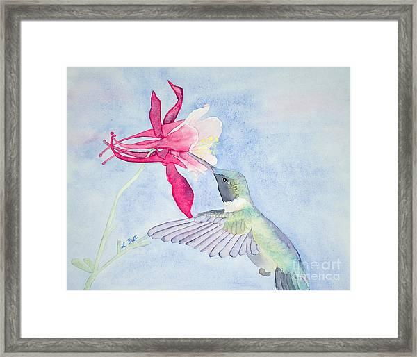 Hummingbird And Columbine Framed Print