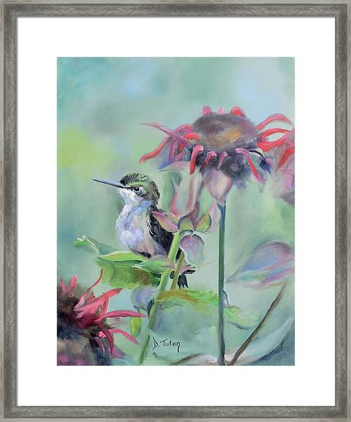 Hummingbird And Coneflowers Framed Print