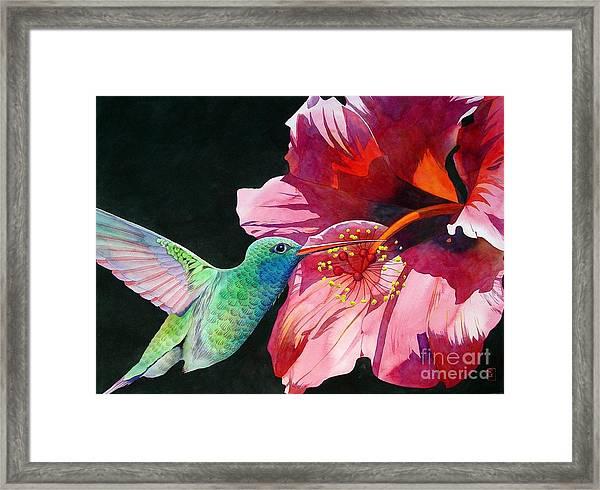 Hummingbird And Hibiscus Framed Print by Robert Hooper
