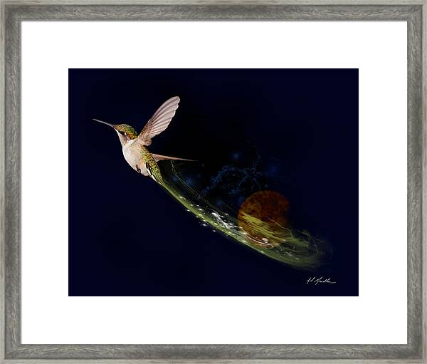 Hummingbird Heaven Framed Print