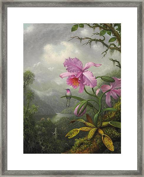 Hummingbird Perched On The Orchid Plant Framed Print