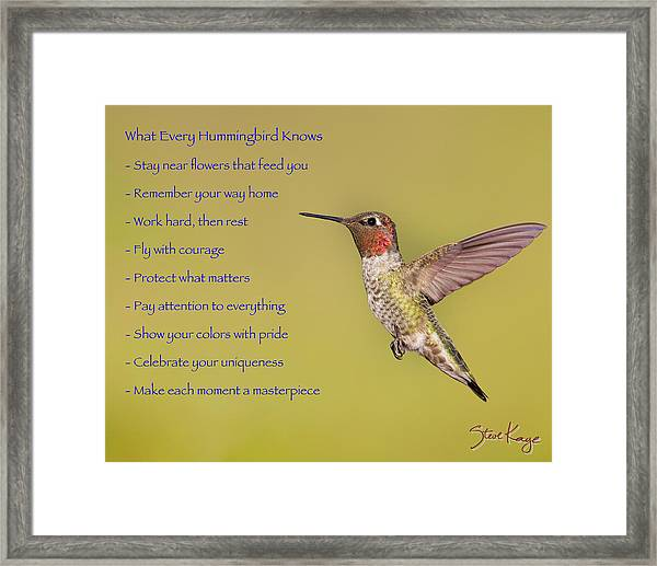 Hummingbird Wisdom Framed Print