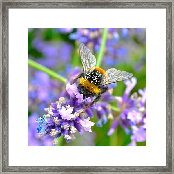 Hungry Bee Framed Print