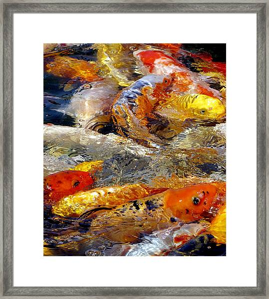 Framed Print featuring the photograph Hungry Koi by Bob Slitzan