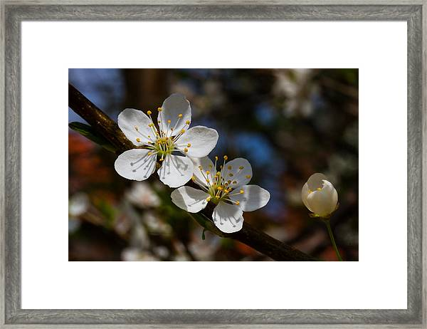 Hungry For Sun Framed Print