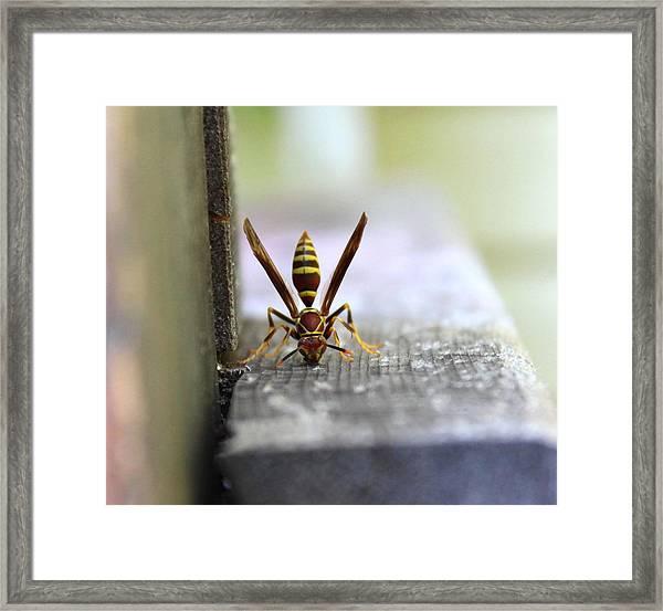 Hungry Hornet Framed Print
