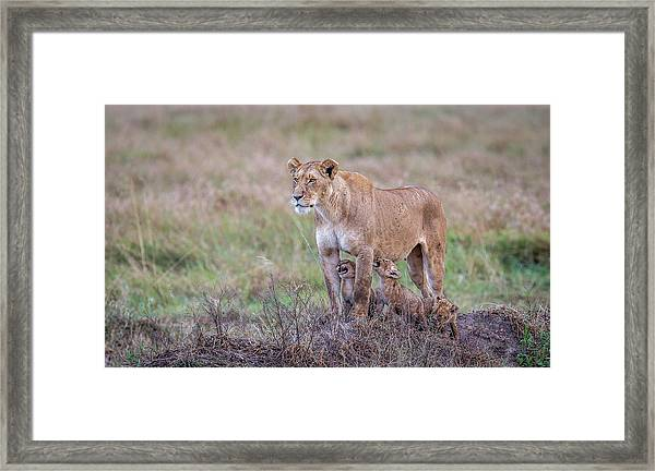 Hungry.... Framed Print by Jeffrey C. Sink