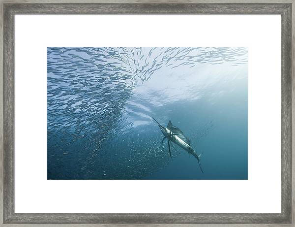 Hunter And The Hunted Framed Print by Alexander Safonov