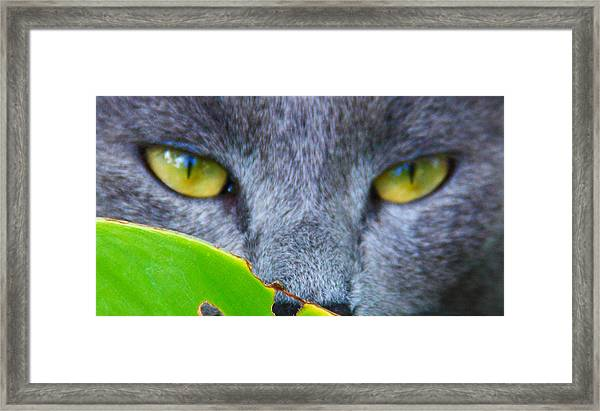 Framed Print featuring the photograph Hunter by Debbie Cundy