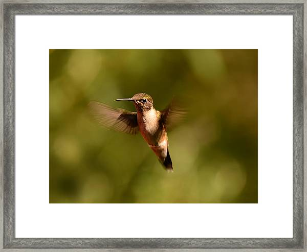 Hurry Up And Take My Picture Framed Print