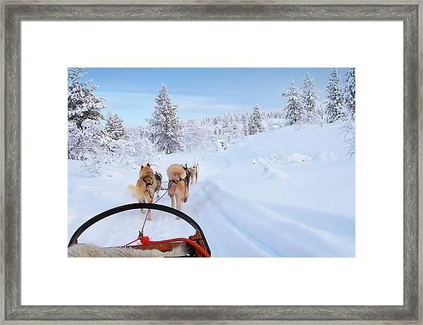 Husky Ride Framed Print by Jpa1999