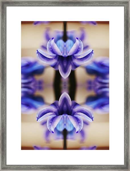 Hyazinth Framed Print by Silvia Otte