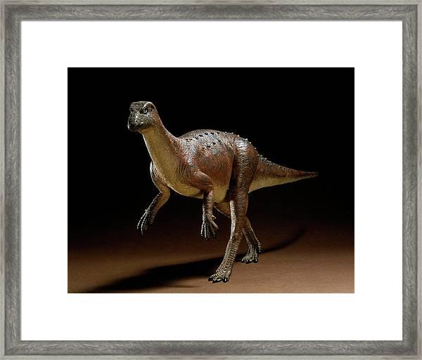 Hypsilophodon Dinosaur Model Framed Print by Natural History Museum, London/science Photo Library