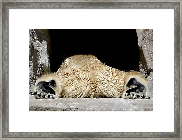 I Cant Bear It Framed Print