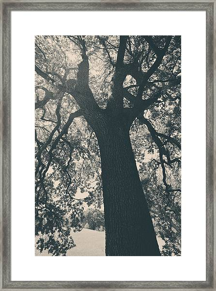 I Can't Describe Framed Print