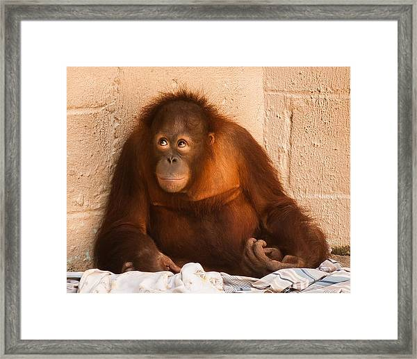 I Didn't Mean To Do It Framed Print