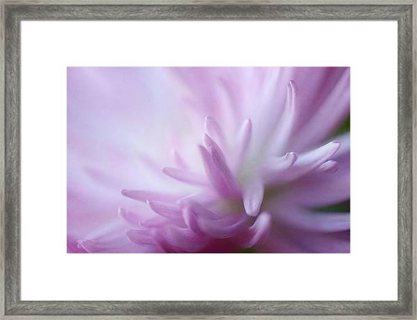 I Dream Of Dahlia Framed Print