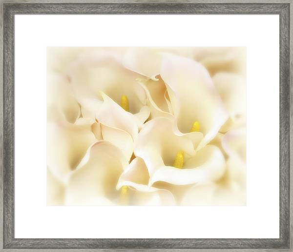 Framed Print featuring the photograph I Dreamed Of Calla Lilies by Gigi Ebert