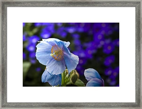 I Feel Blue Framed Print
