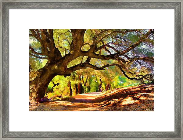 I Gave My Word To This Tree Framed Print