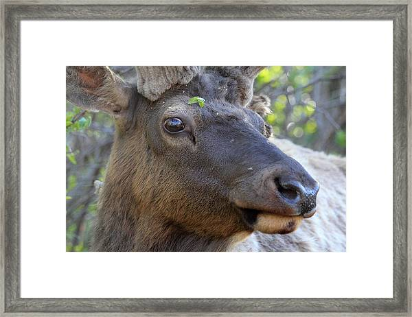 I Have What On My Face? Framed Print