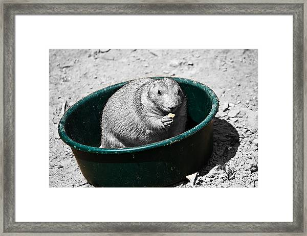 I Just Ate A Little Bit Framed Print