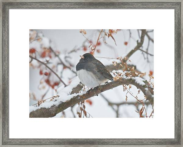 I Just Want To Keep Warm Framed Print