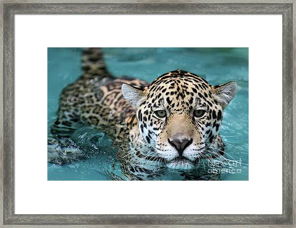 I Love The Water Framed Print