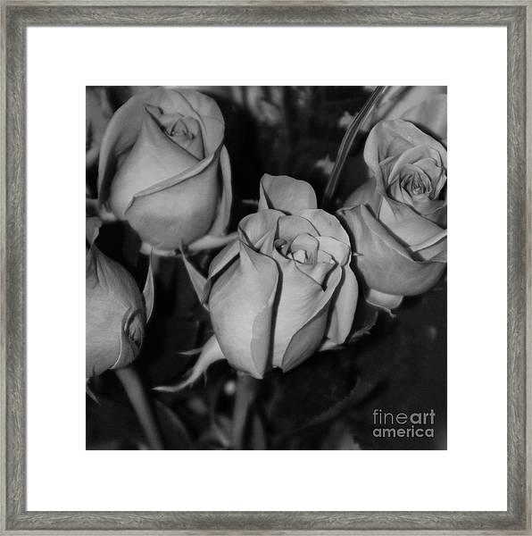 Black And White Roses Framed Print