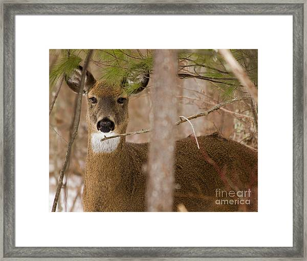 I See You - Again Framed Print