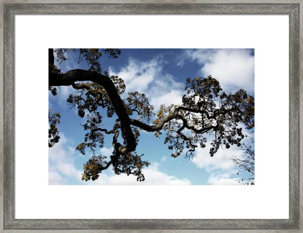 I Touch The Sky Framed Print