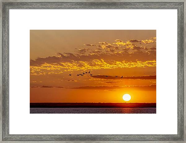 Framed Print featuring the photograph Ibis Flyover At Sunset by Rob Graham